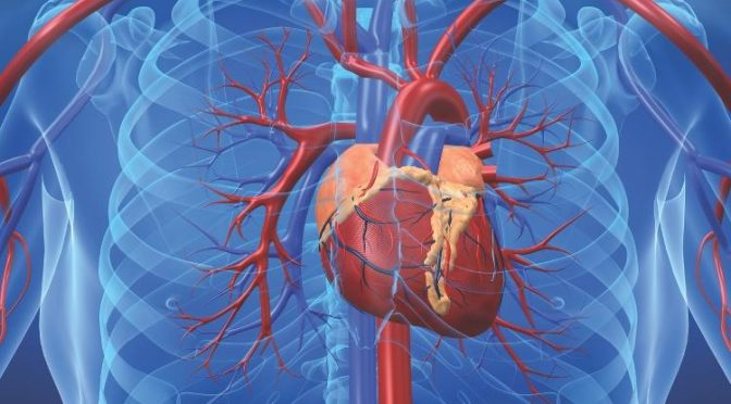 Heart disease – causes and processes?